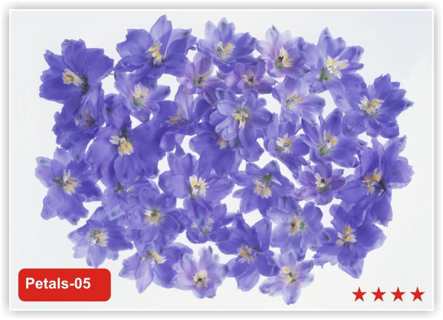 Заказать цветы с доставкой в санкт-петербурге приморский район